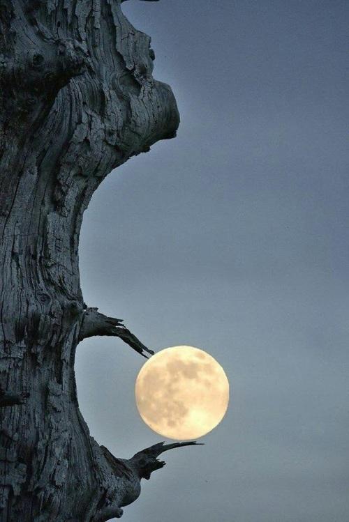 atrapa la luna