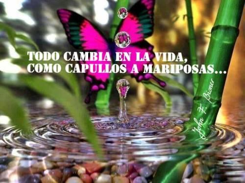 mariposa cambio